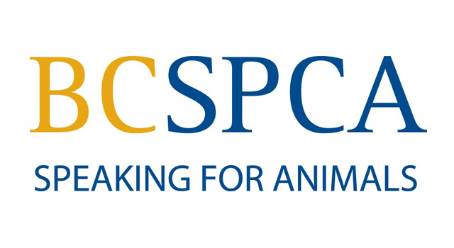 Picture Perfect supports the BC SPCA for Animals