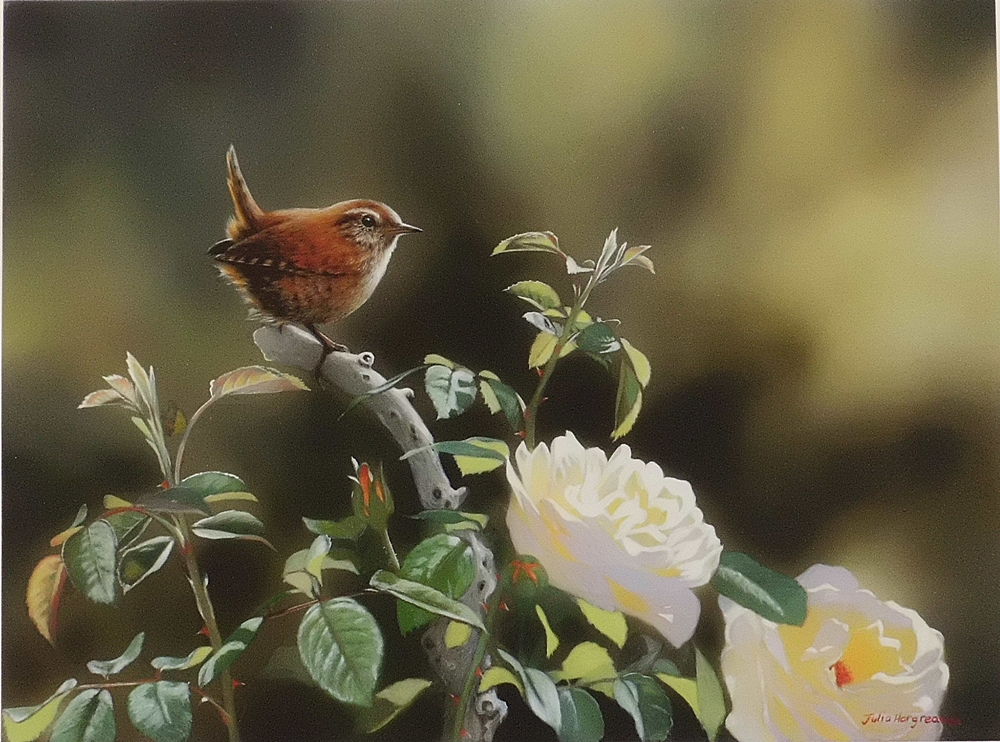 'Early Morning Wren'