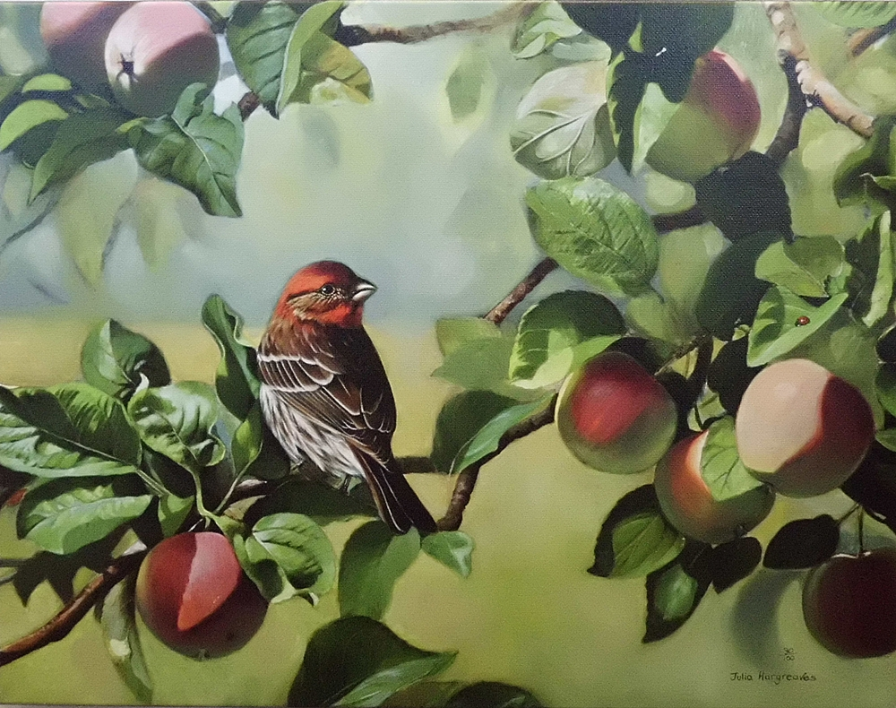 'Orchard Finch Embellished'
