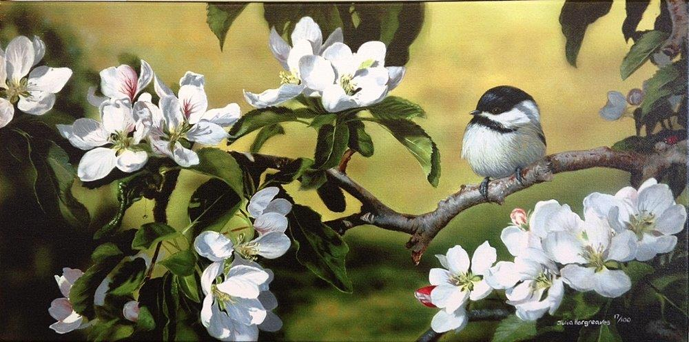'May Blossom And Chickadee'